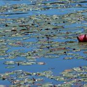 Thetis Lake I get To blog