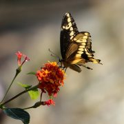 transformation, butterfly, blog