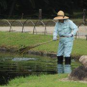 Taking care of the pond Anne Lamott post
