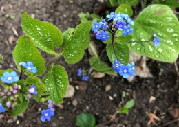 Forget Me Nots and Blessings